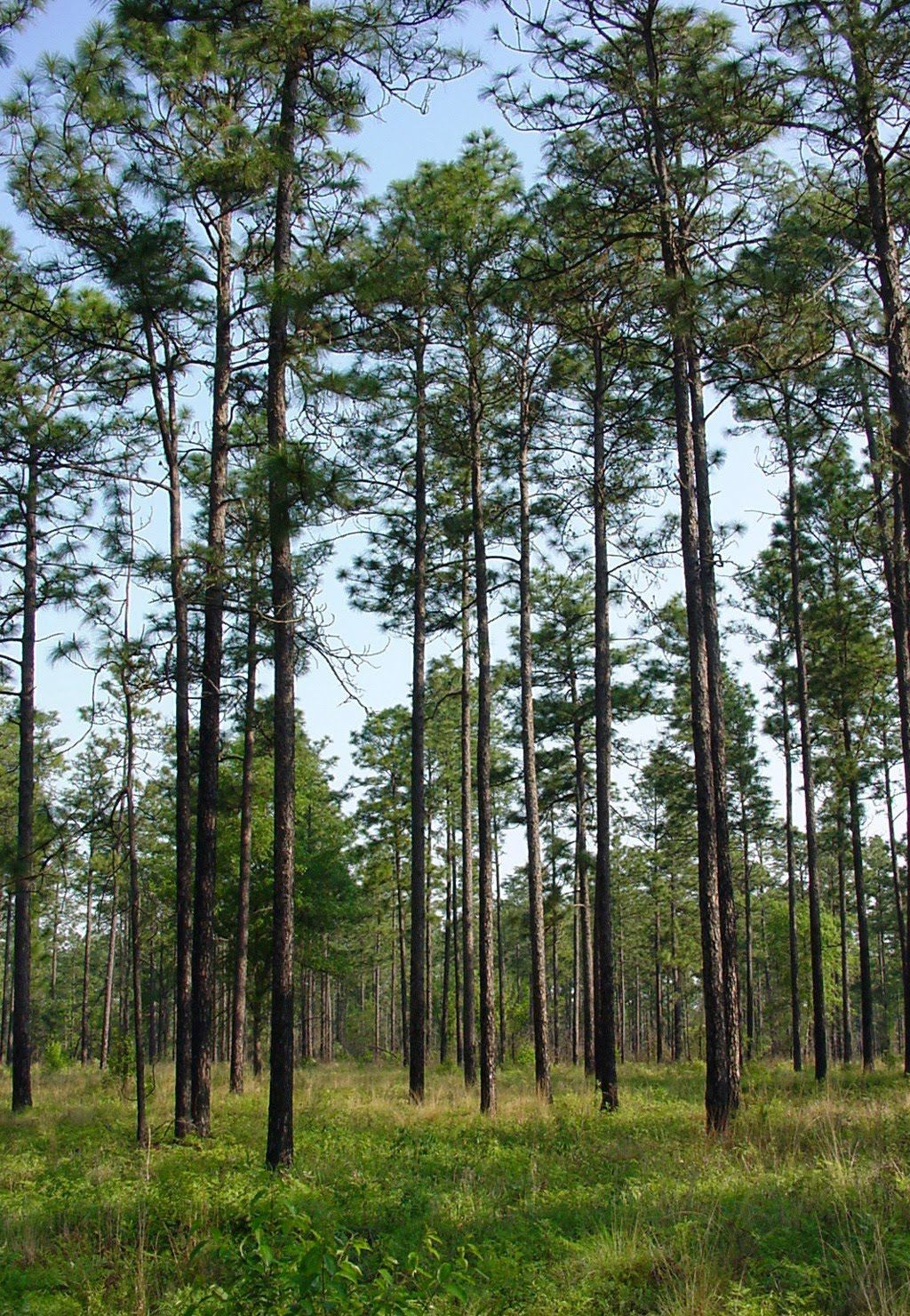Explore Sweet Home Alabama National Forest And More Southern Pine