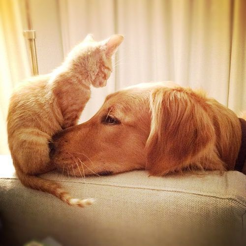 #cats and #dogs are best friends