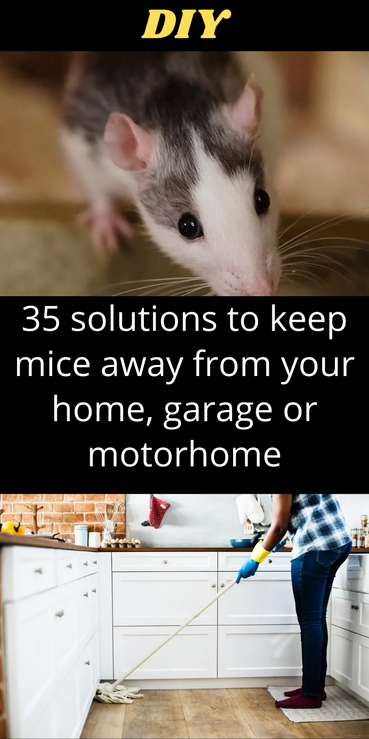 35 Solutions Pour Eloigner Les Souris De Votre Maison Garage Ou Camping Car In 2020 Diy Life Hacks Diy Life Garage Makeover