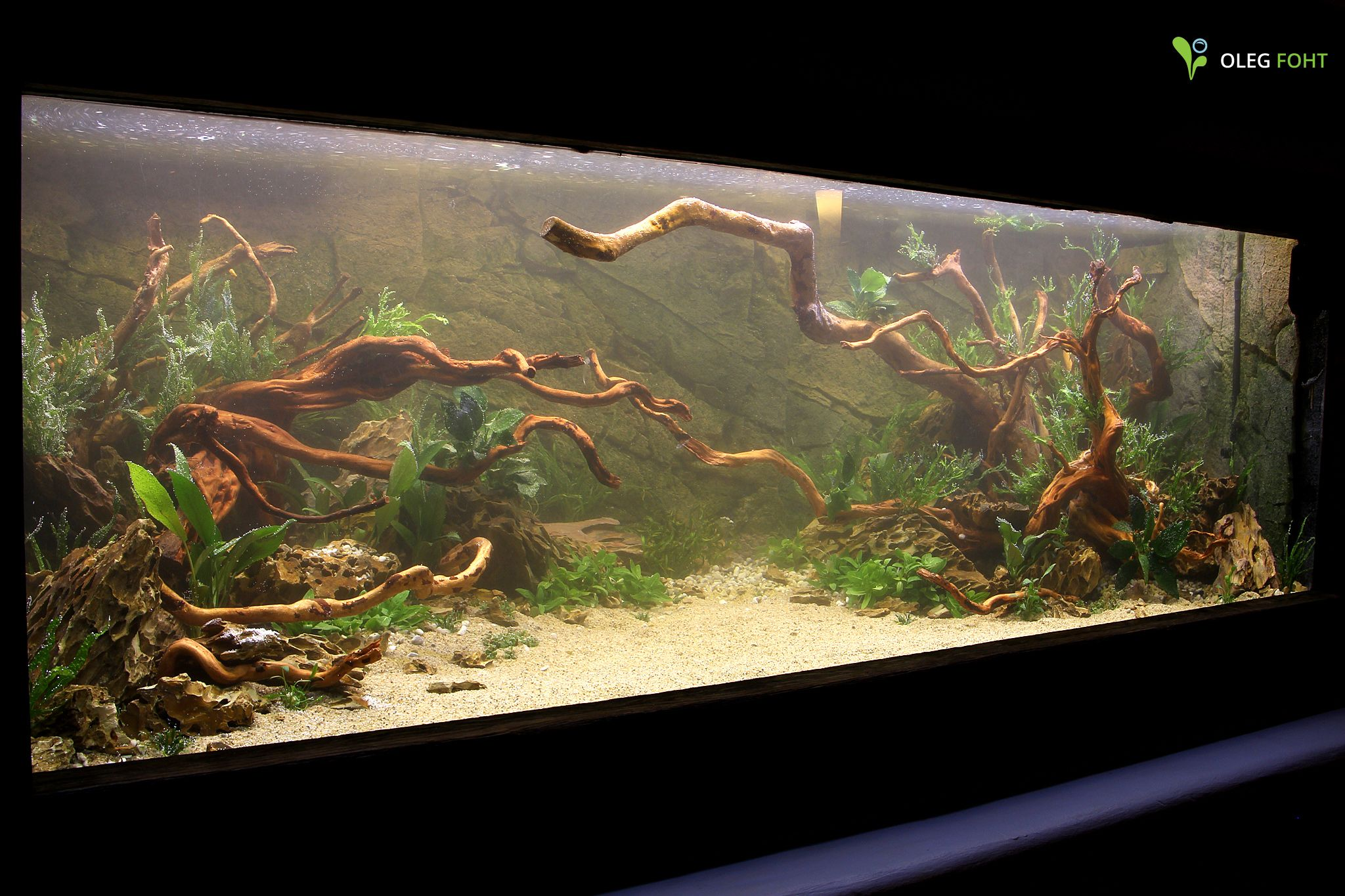New tank directly after setting up when dreams come for Fish tank set