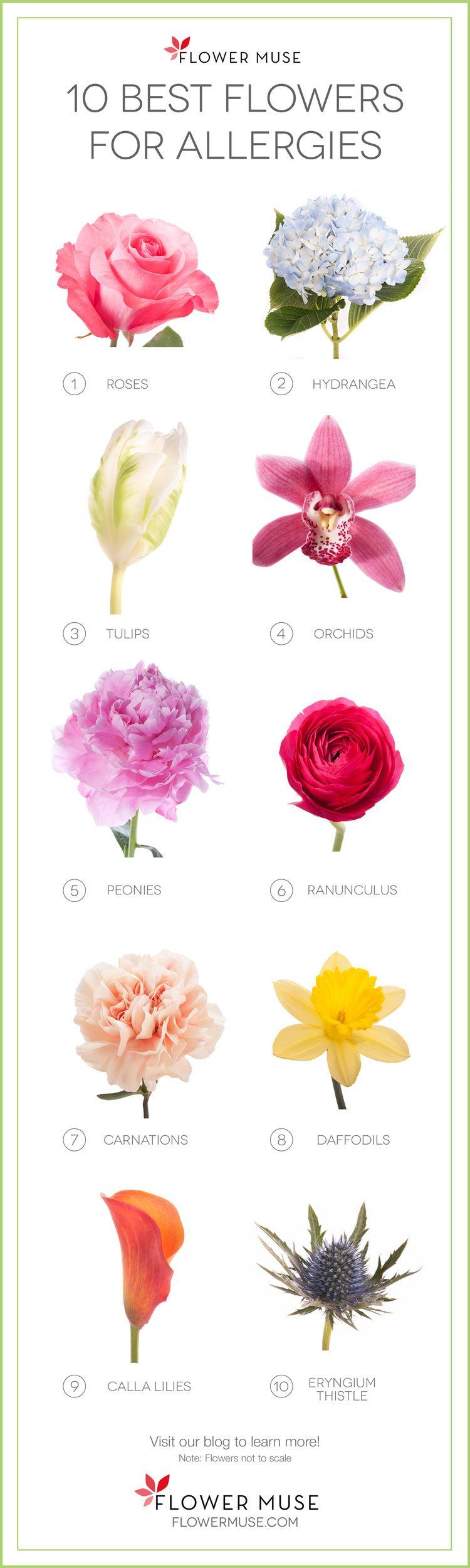 10 Best Flowers For Allergies Amazing Flowers Flowers Types Of Flowers