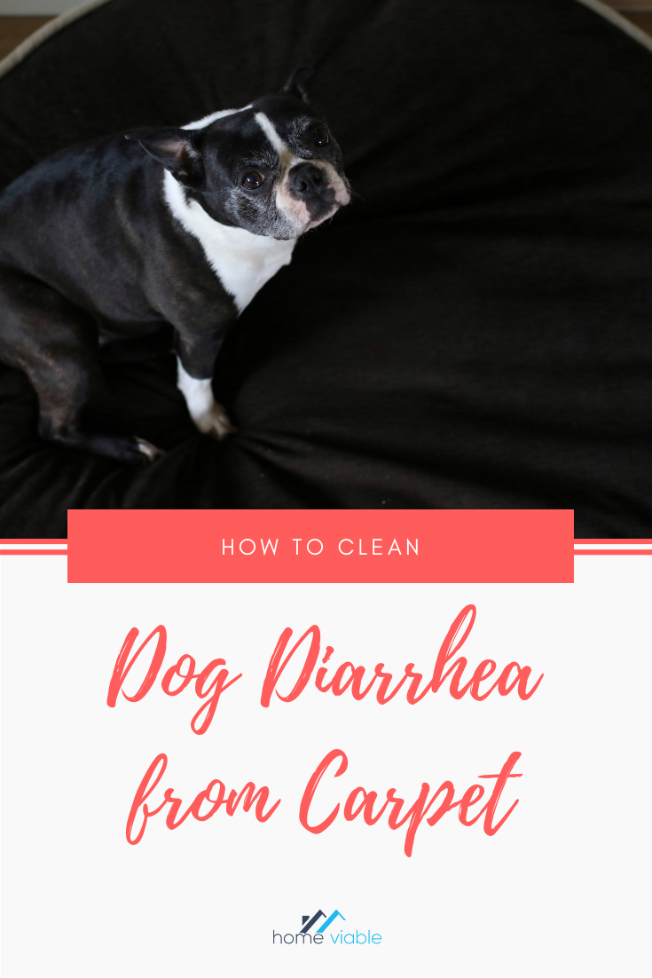 how to clean runny dog poop off carpet
