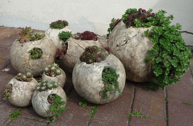 Hauswurz Sukkulenten in Betonkugeln gepflanzt #sukkulentent #succulents Salvabrani ~ 03164802_Sukkulenten Hauswurz Unterschied