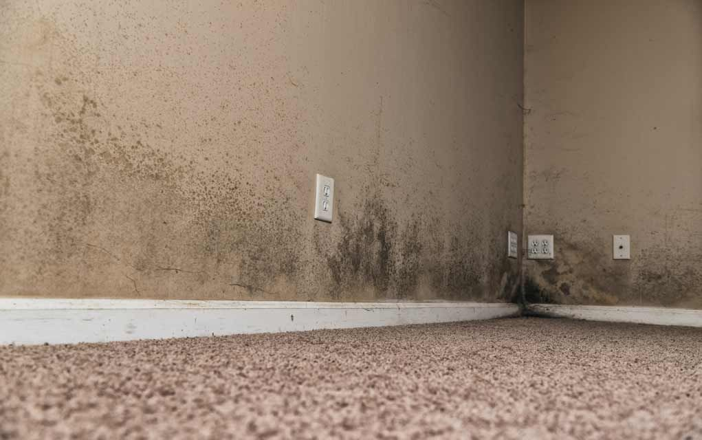3 Signs You Have Toxic Black Mold In Your Home Toxic Black Mold Toxic Mold Mold Remover