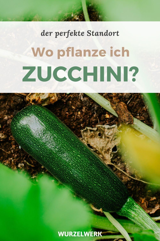 Der komplette Zucchini-Guide – Zucchini pflanzen, anbauen ernten