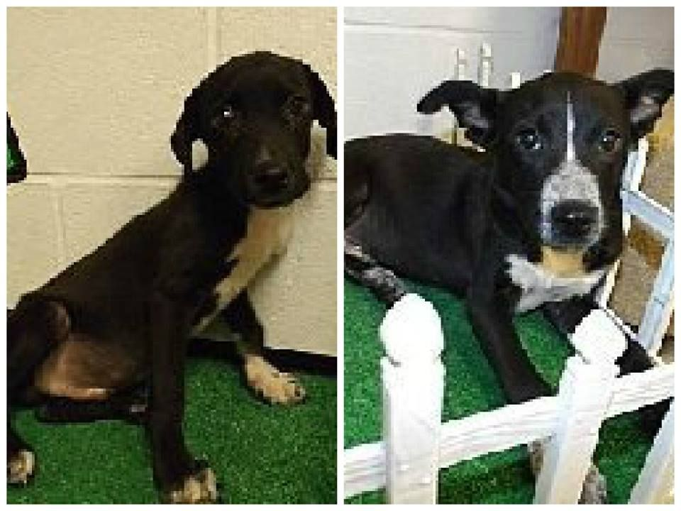 Rome Ga Floyd County Ac No Vet On Site The Employees Kill The Animals Tuesday Is It Id 1339 1340 2 Babies
