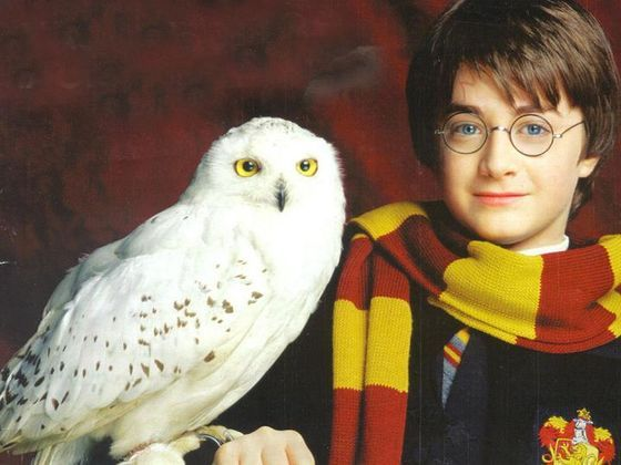 Which Harry Potter Pet Were You Meant To Own Harry Potter Owl Harry Potter Fun Facts Harry Potter Pets