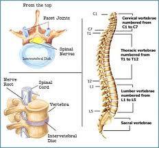 spine - Google 검색