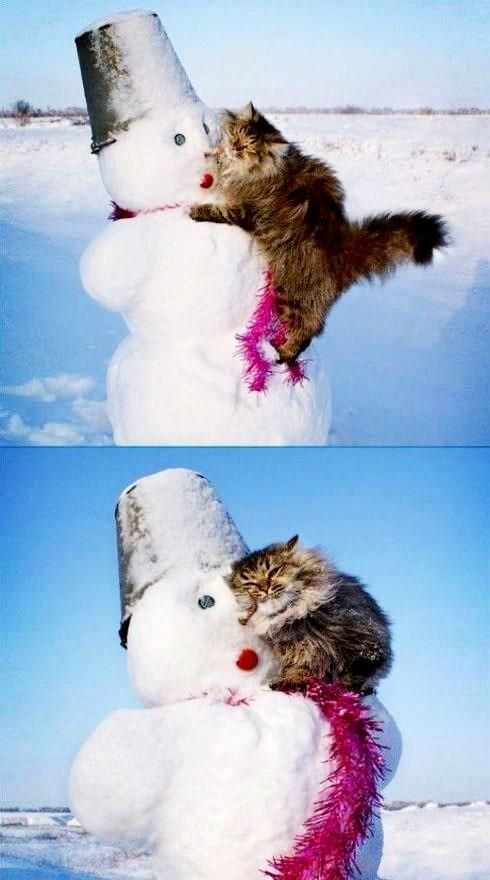 cute cat with snowman