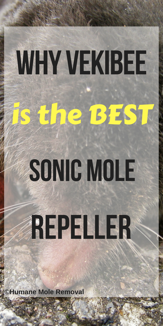 How to get rid of moles in your yard humanely with sonic mole repellers. They are both humane and safe. Read why Vekibee is the best one.