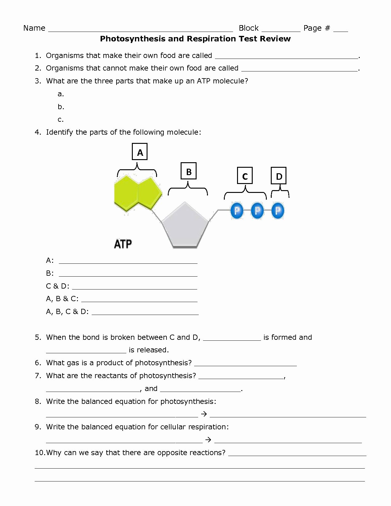 50 Photosynthesis Worksheet Answer Key In