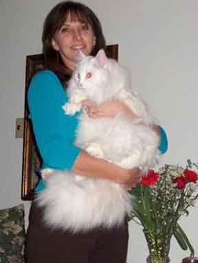 Siberian Kittens For Sale Kittens Cat Breeder Cats And Kittens