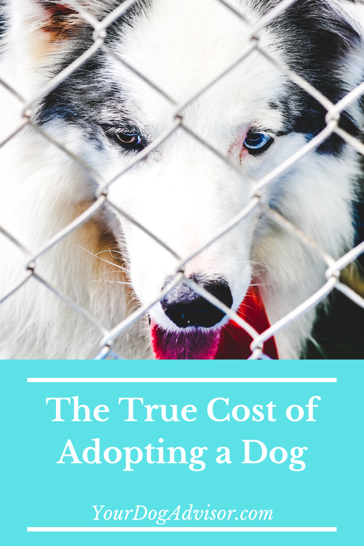 How Much Does it Cost to Adopt a Dog? Dog adoption, Dogs
