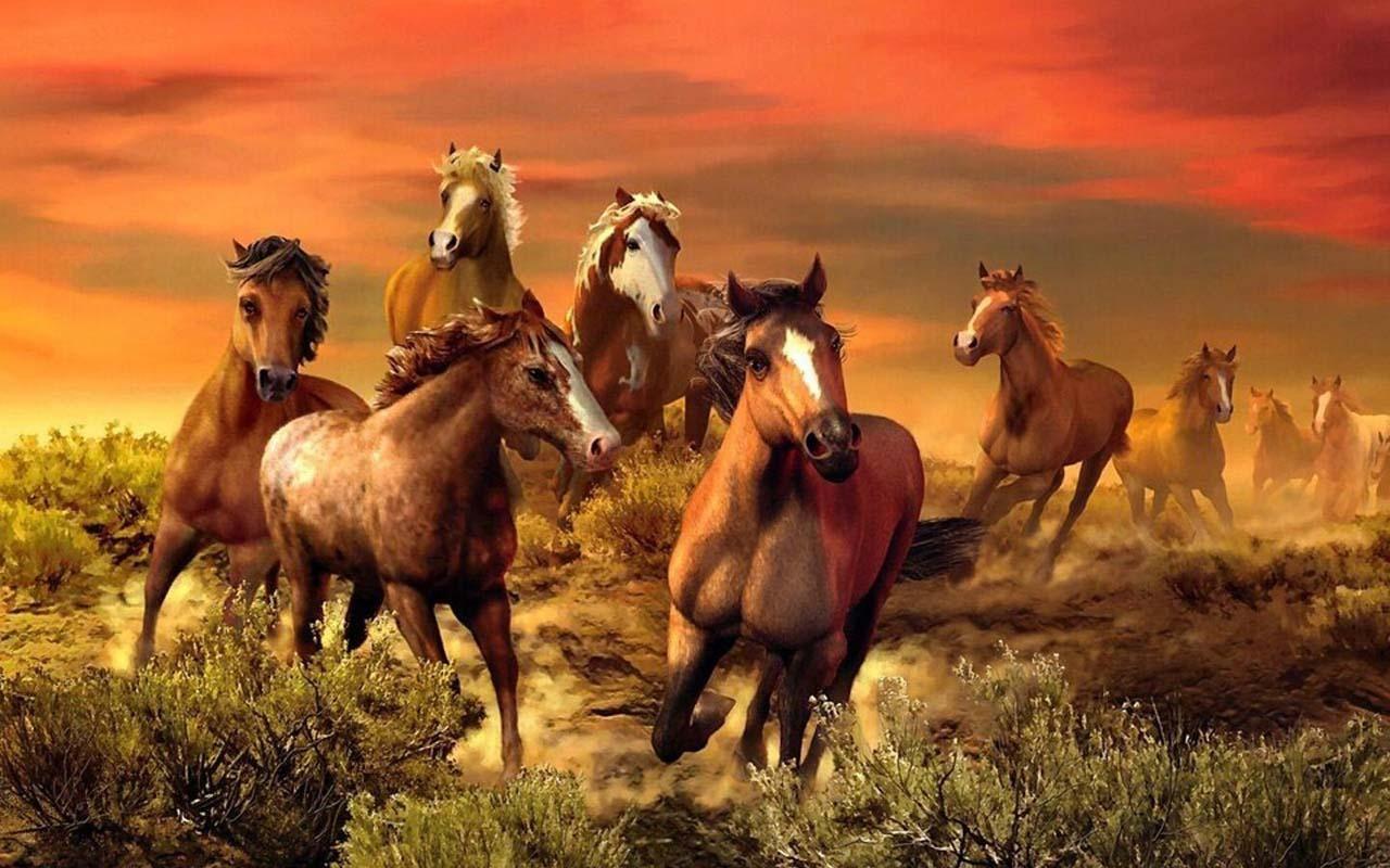 Beautiful Wallpaper Horse Android - b53f86deb92da353e7a0c9079aac3e2d  Collection_68125.jpg