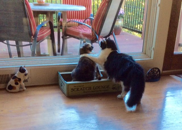 Enter our NEW Crazy Cat Caption Contest for October! | http://blog.mythreecats.com/1628-2/