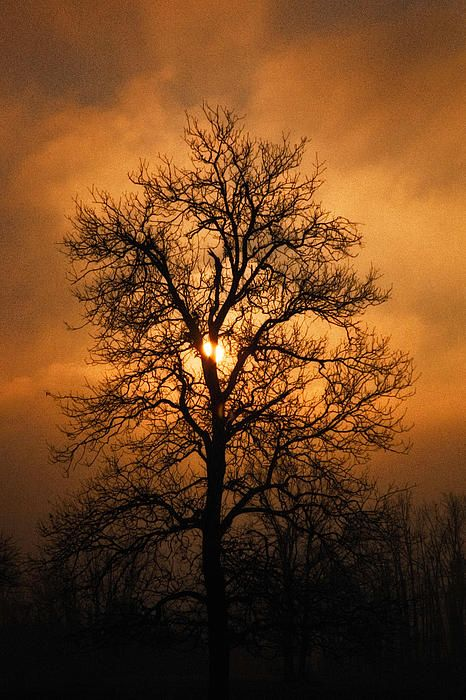 Vendo Além Do Natural Márcio Valadão: Oak Tree At Sunrise By Michael Dougherty