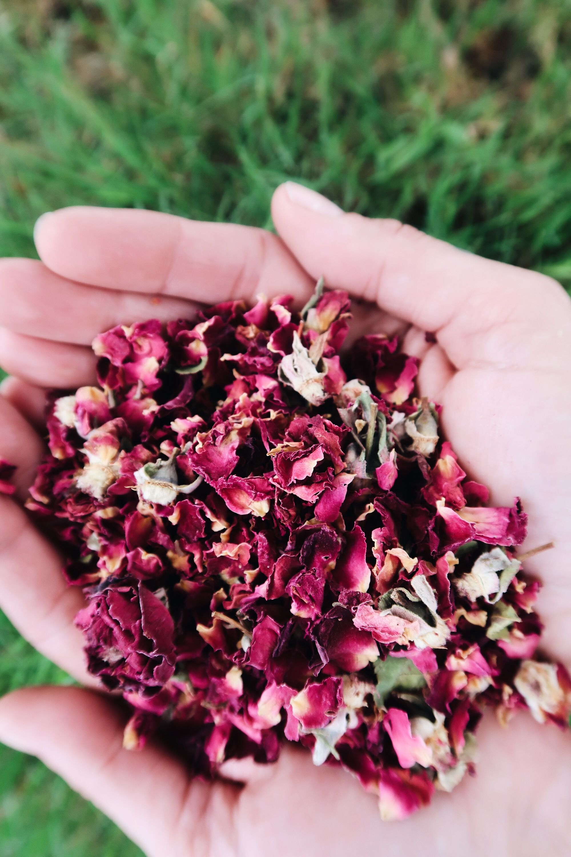 Best Ways to use Dry Flowers in your DIY Products Dried