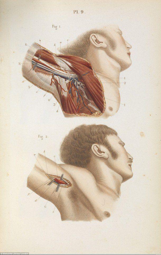 Armpit anatomy   Science   Pinterest   Anatomy, Creepy images and ...