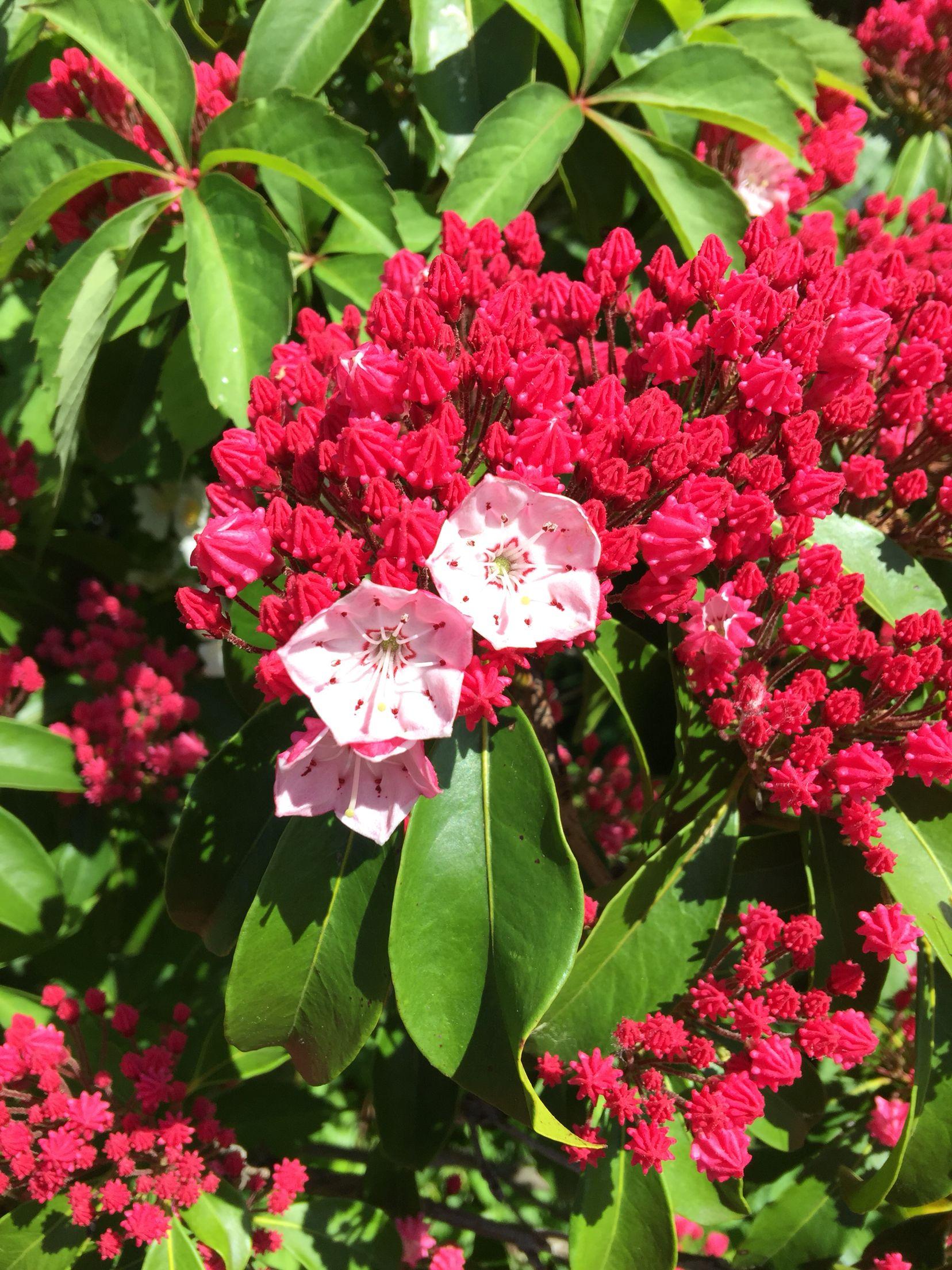 Just blooming Bloom, Plants, Garden