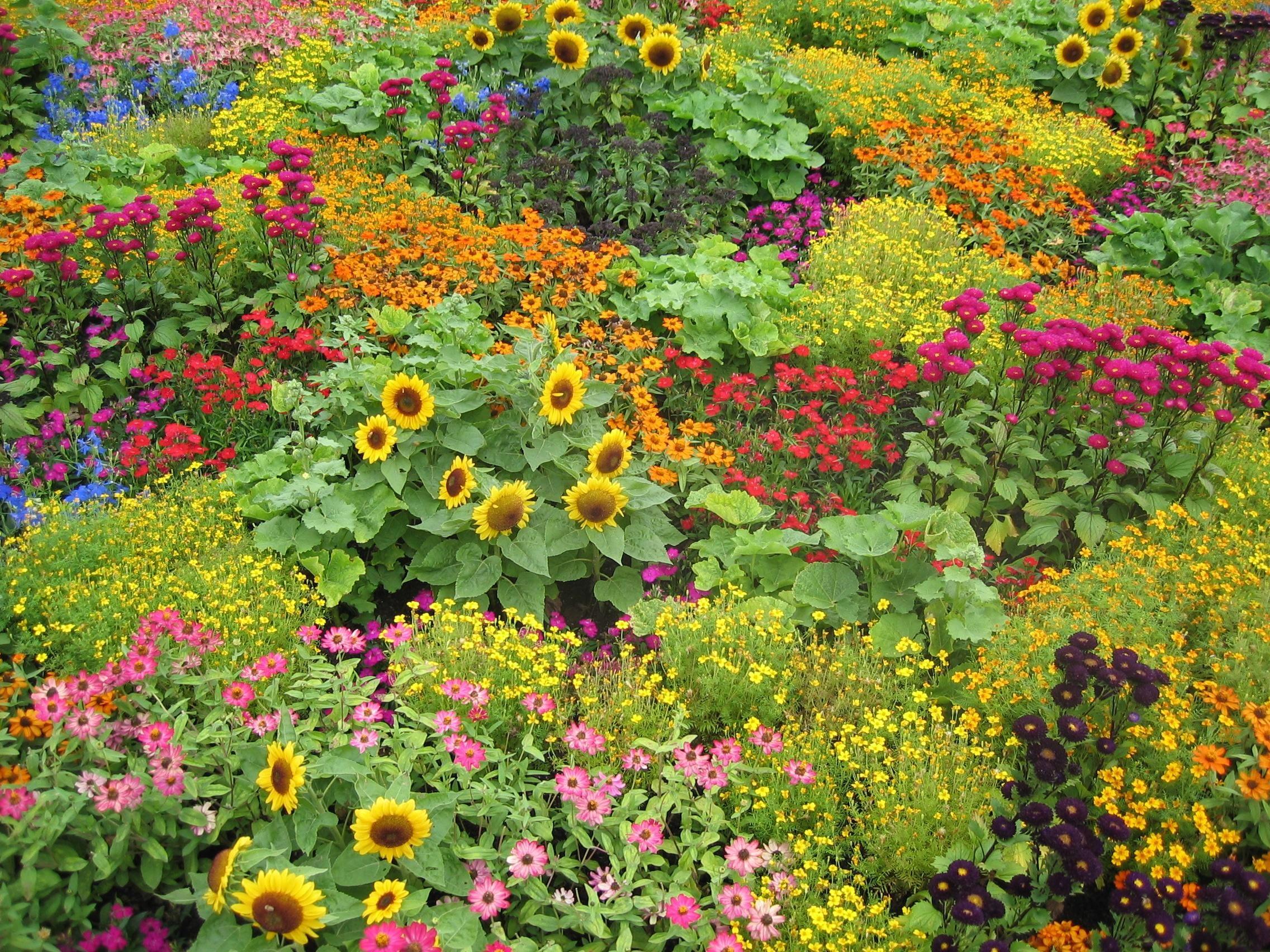 English Garden This Is What My Next Door Neighbor S 400 x 300