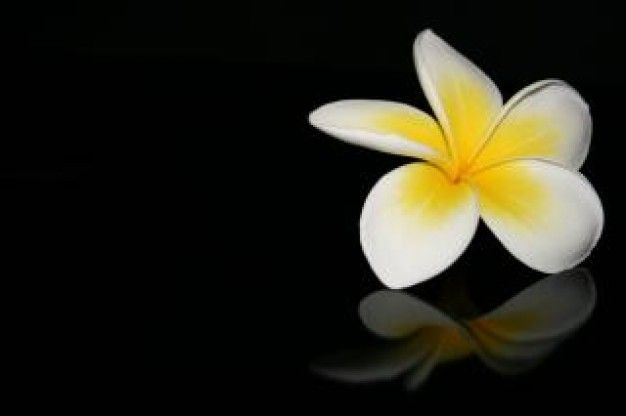 Fragrance Plumeria Flower Perfume Gardenia Perfume Perfume