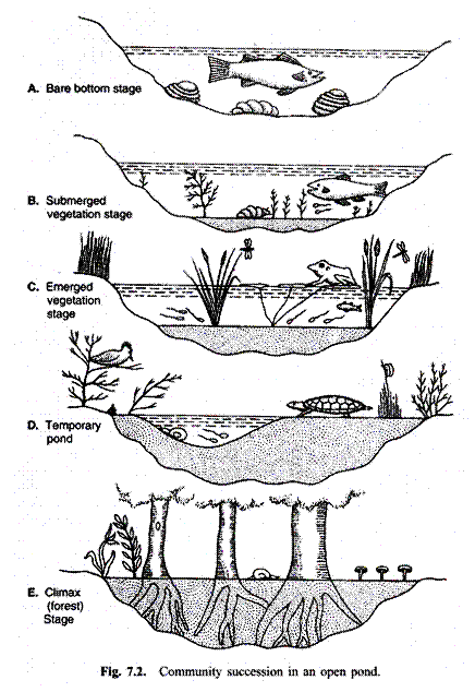Community succession in an open pond also food webs pinterest rh