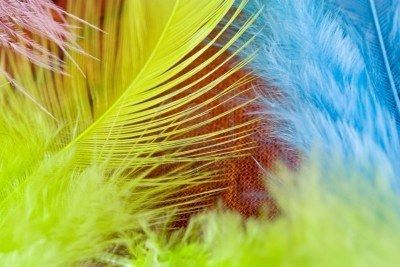 Exotic Soft Beautiful Pink Blue Green feathers