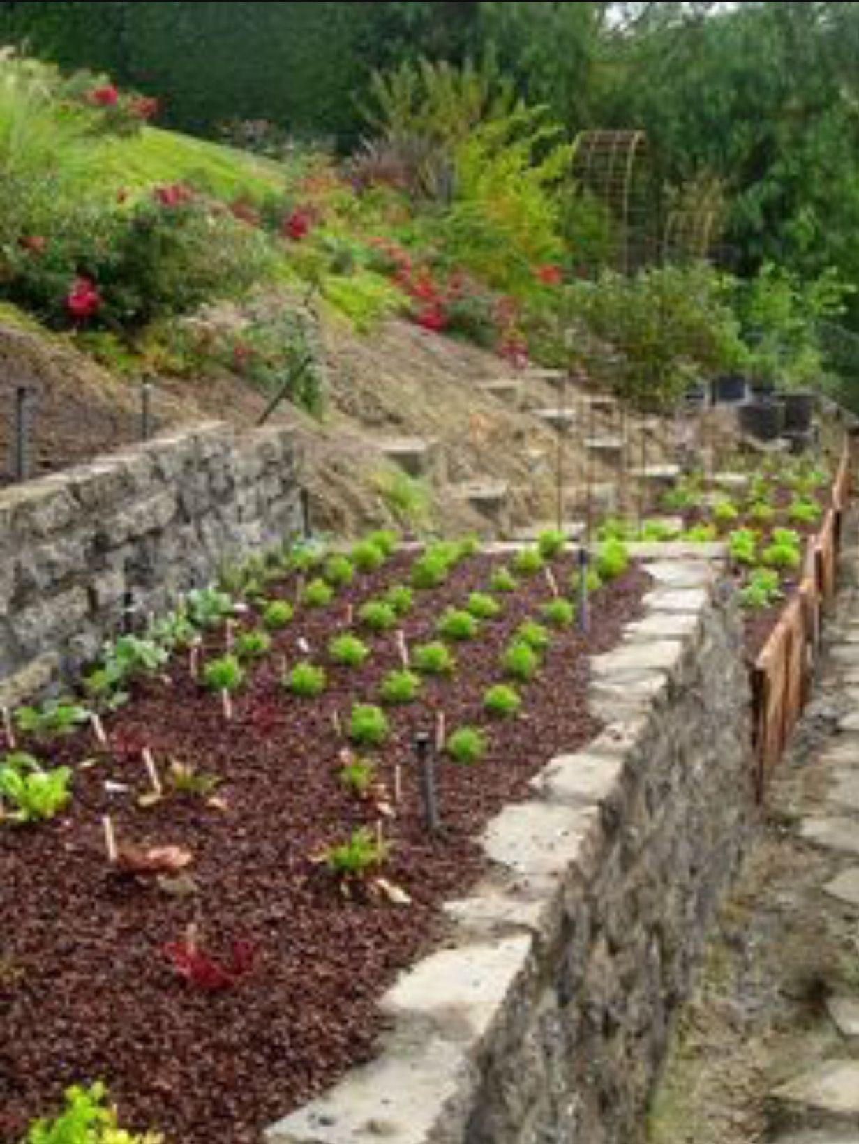 Steep yard tier option   Sloped garden, Vegetable garden ... on Steep Sloped Backyard Ideas id=35252