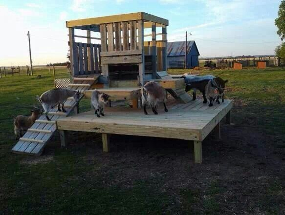 Awesome playground for goats | Dairy Goats | Pinterest | Goats ...