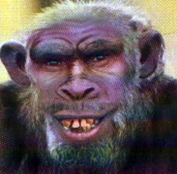 Are real humanzee's possible?