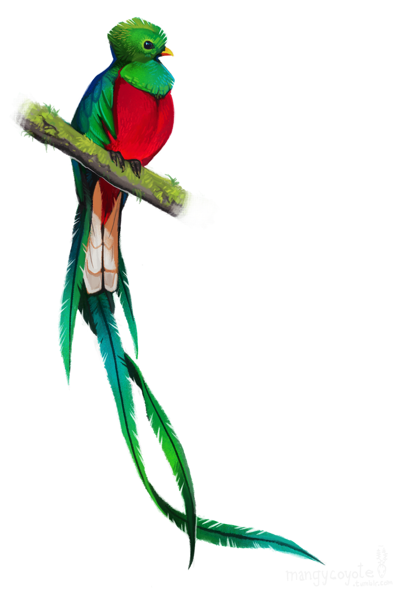 Image Result For Resplendent Quetzal Colombian Quetzal Tattoo Mayan Tattoos Mayan Art