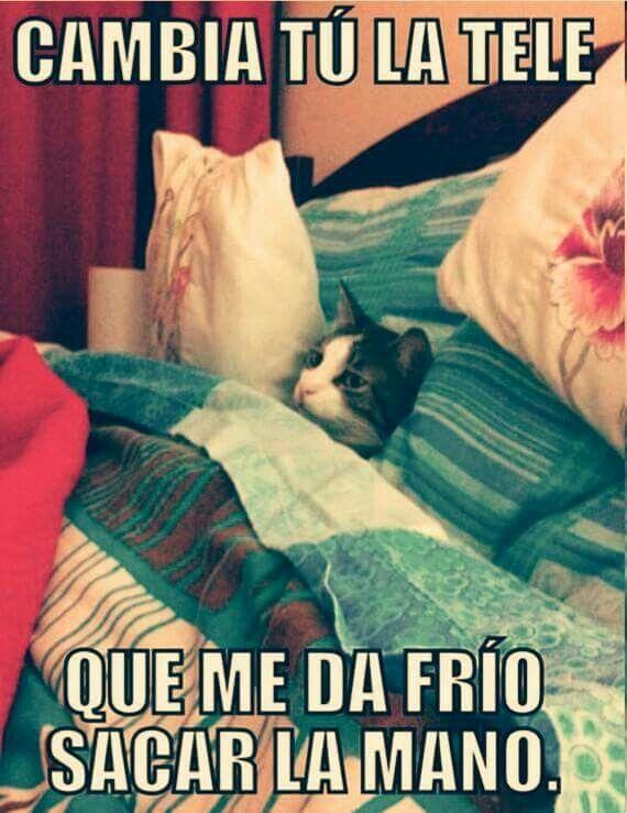 Pin De Cristina Dalgo En Funny Memes De Frio Memes De Gatos Divertidos Memes Divertidos