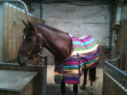 RIDER/SHARER WANTED FOR SUMMER 2012 IN ESSEX