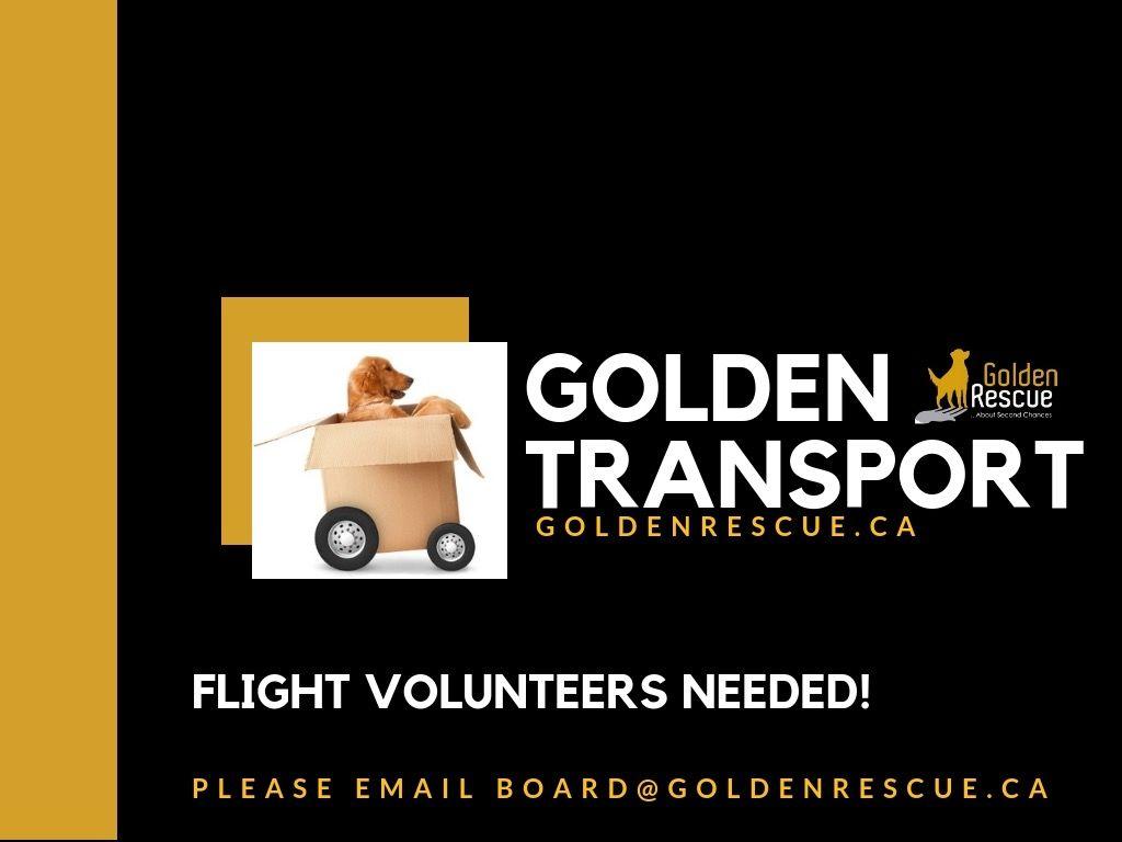 Flight Volunteer Needed We Are Looking For A Flight Volunteer