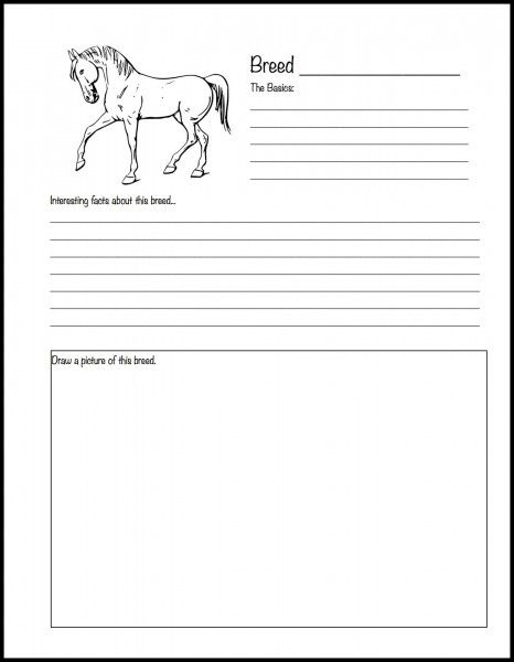 picture about Horse Worksheets Printable known as Final homeschool record for horse fans Equine Science