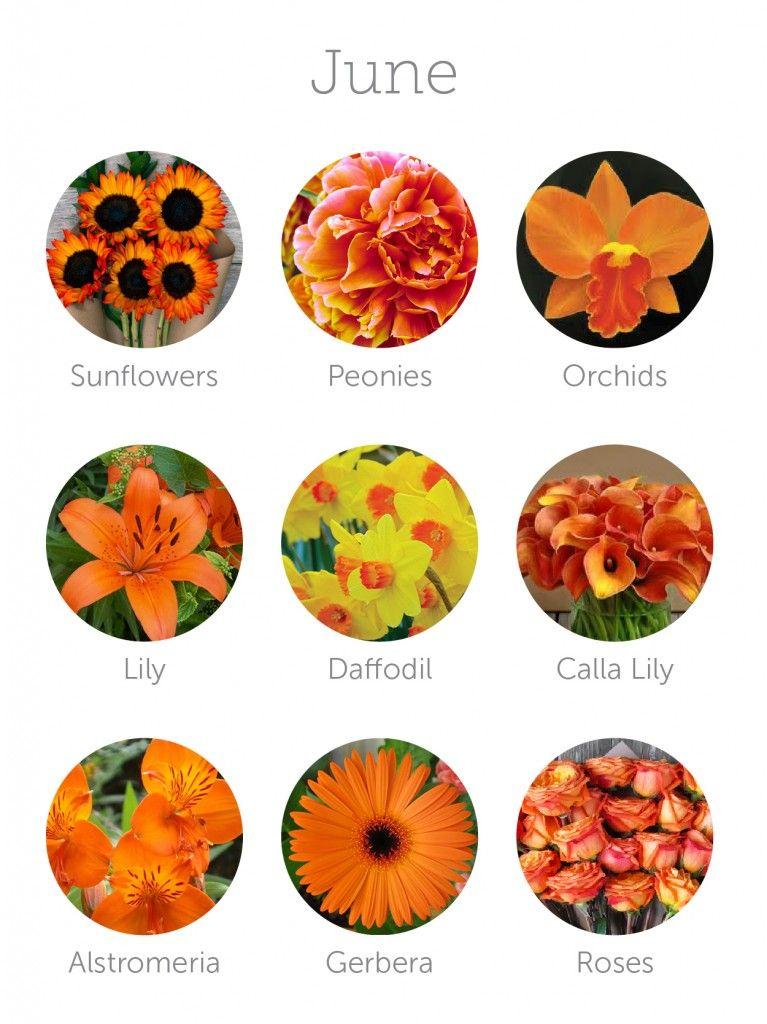 Wedding budget tip 16 choose in season flowers budget savvy wedding flowers in season june mightylinksfo