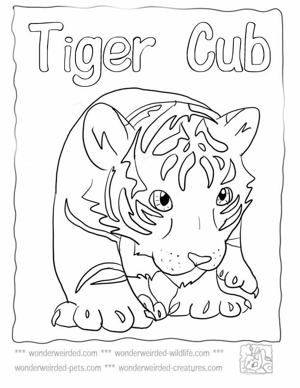 Baby Tiger Coloring Pages at www.wonderweirded-wildlife.com/baby ...