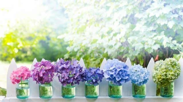 Deko Tipps Balkon Marmeladengläser Hortensien Blumen