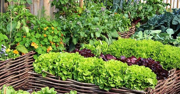 10 Ridiculously Easy Vegetables To Grow This Spring 400 x 300