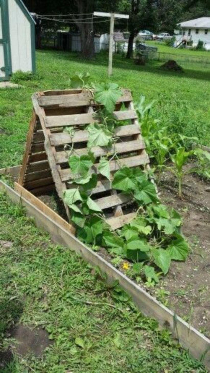 46 amazing beautifull diy trellis for your small garden