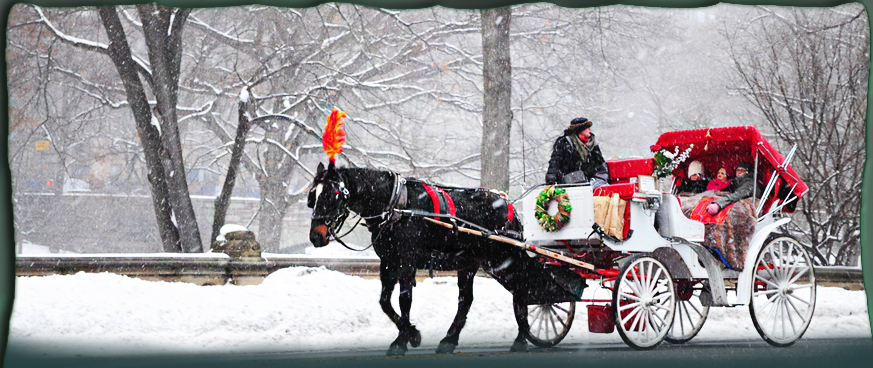 Image result for Christmas Time New York City Central Park