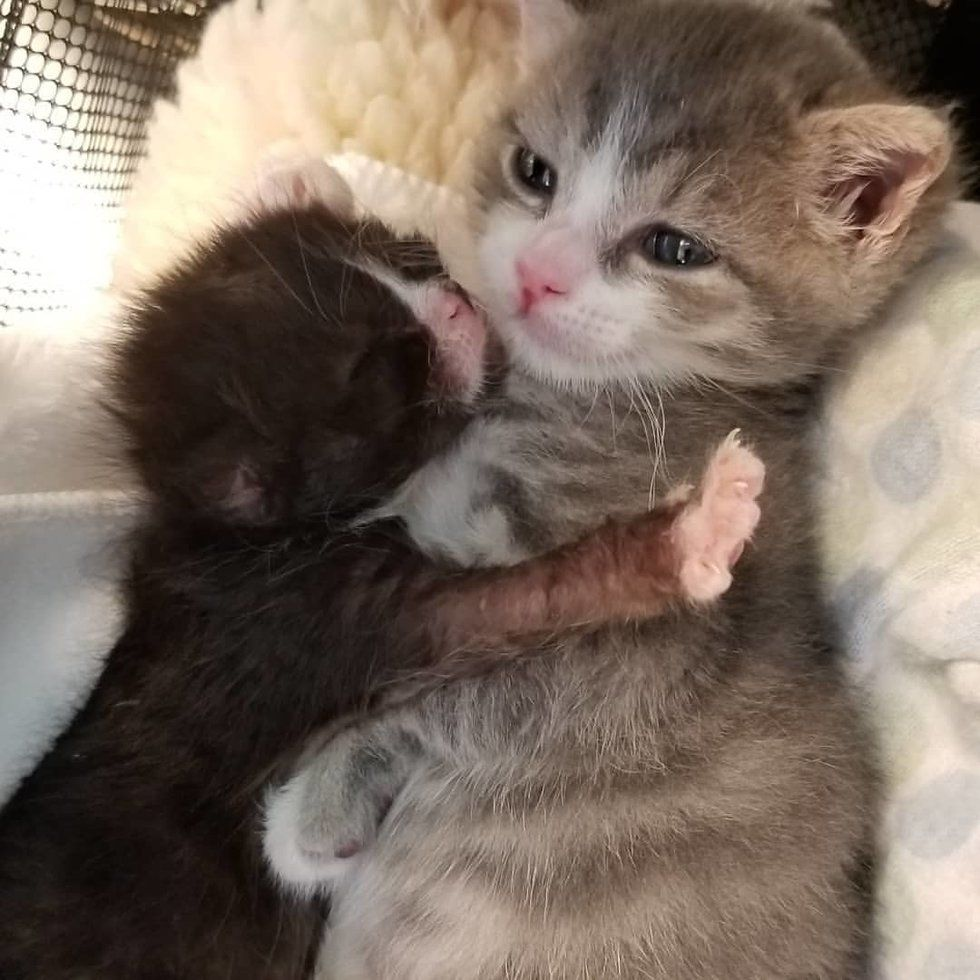 Kitten Who Had Rough Start Fights To Live And Even Helps Tinier Kittens In Need Kittens Cutest Cute Cats And Kittens Kittens