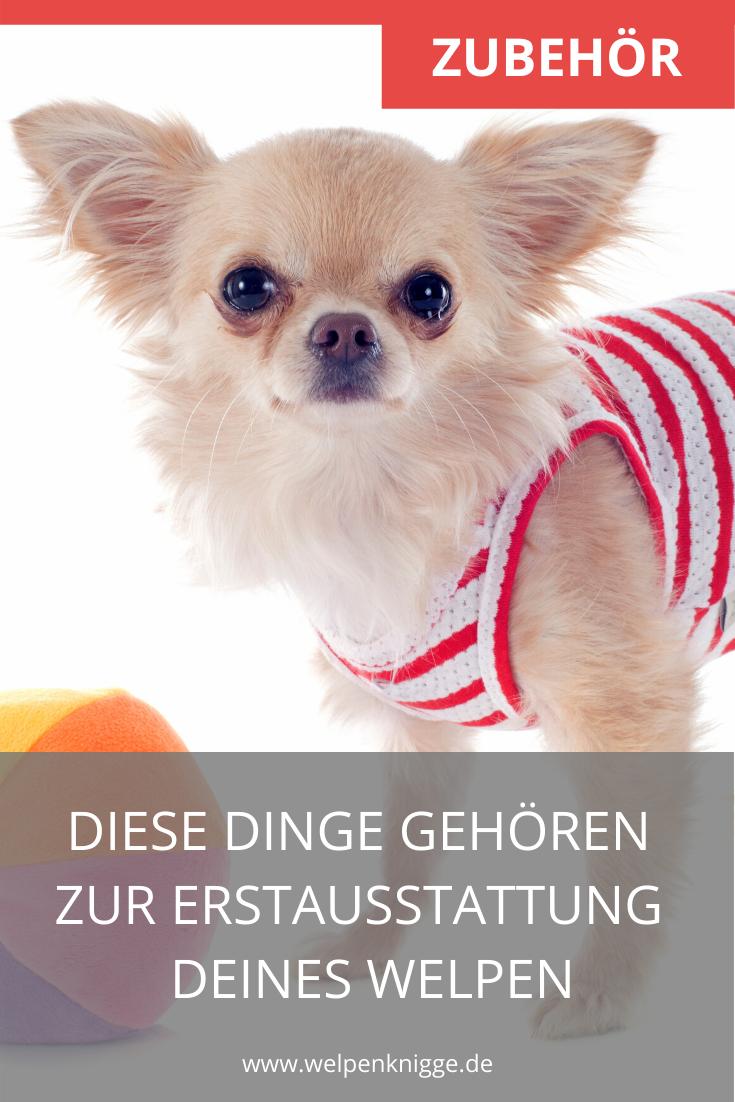 Erstausstattung Fur Welpen Inkl Checkliste Futter Leine Spielzeug Versicherung Steuer Co In 2020 Welpen Hunde Futter Spielzeug