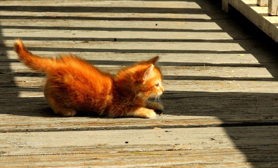 Kitten on a Bridge by YvonneMcCarthy. @go4fotos