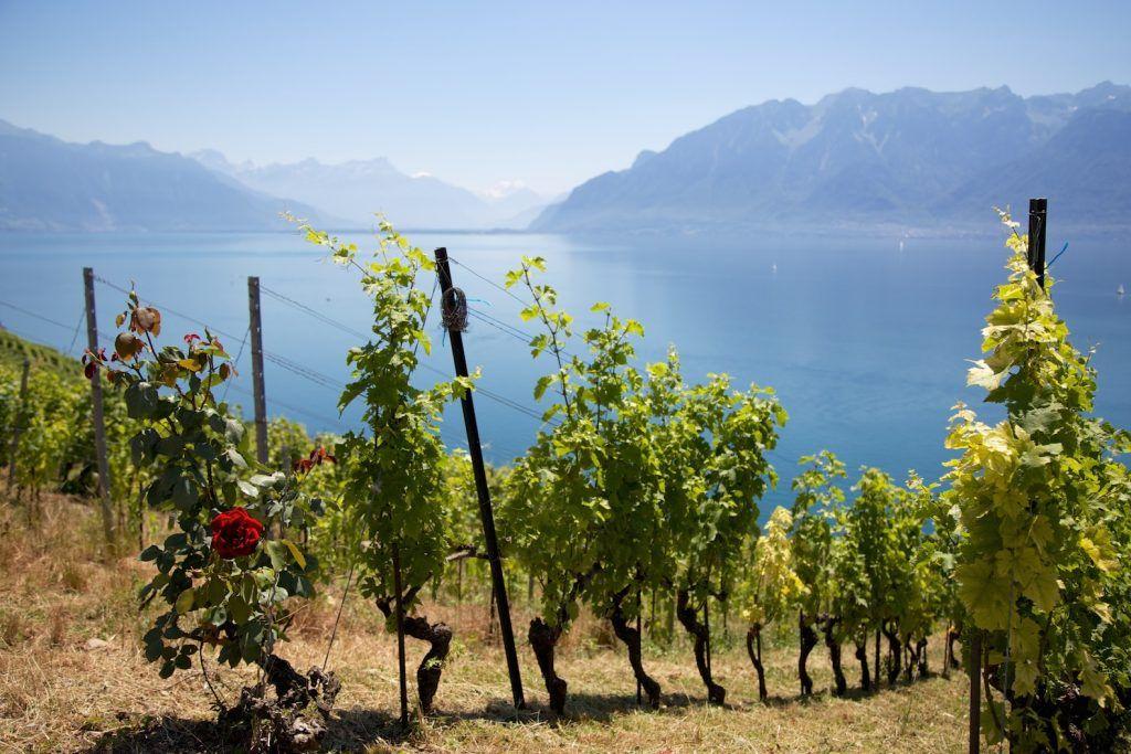 Randonnee Dans Le Lavaux Autour Du Lac Leman En Suisse Annecy France Natural Landmarks Annecy