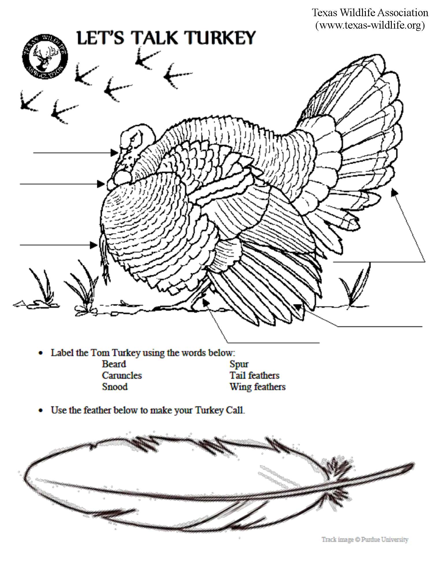 Let\'s Talk Turkey Anatomy Page - Texas Wildlife Association ...