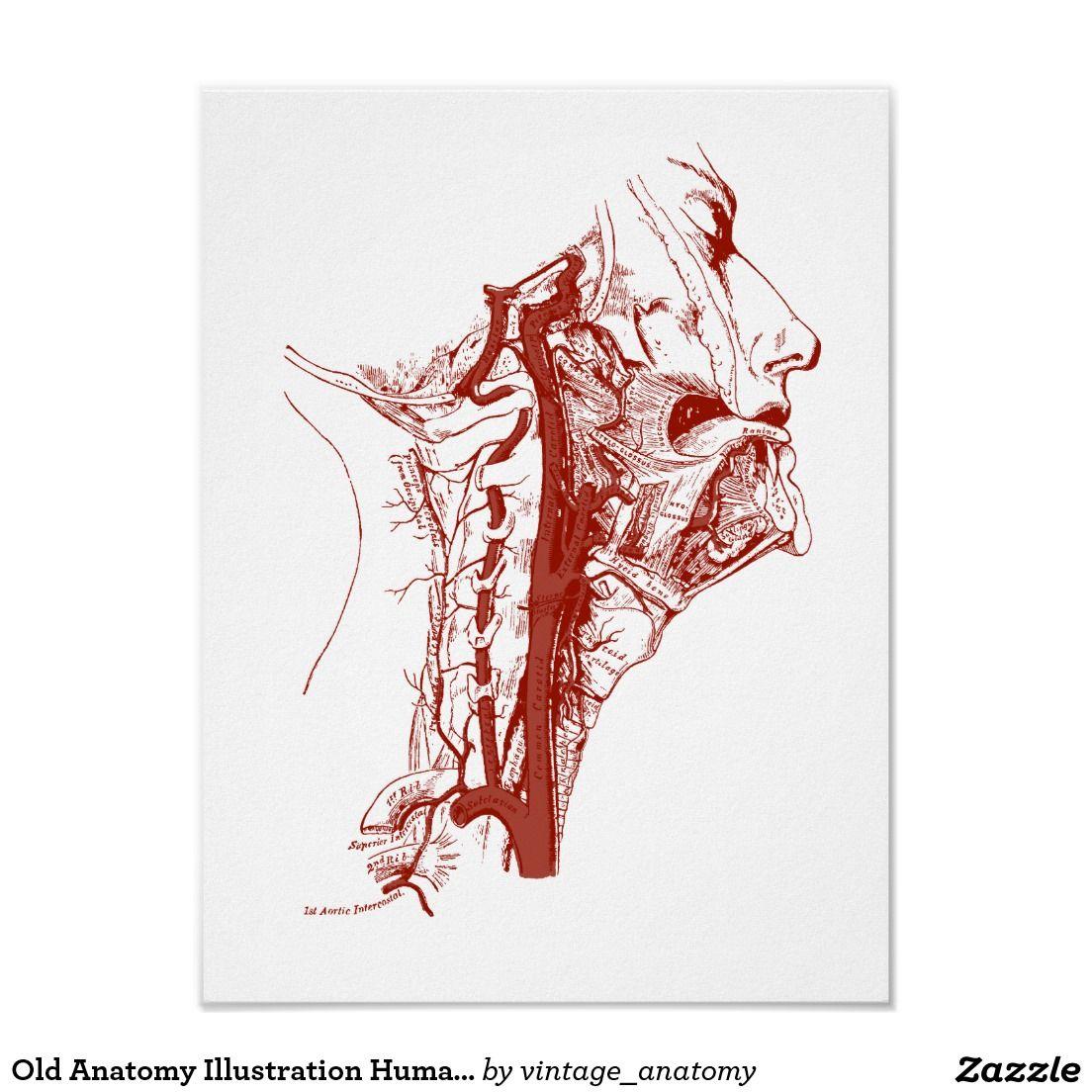 Old Anatomy Illustration Human Vertebral Arteries Poster Vertebral