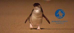 Phillips Island Penguin Parade