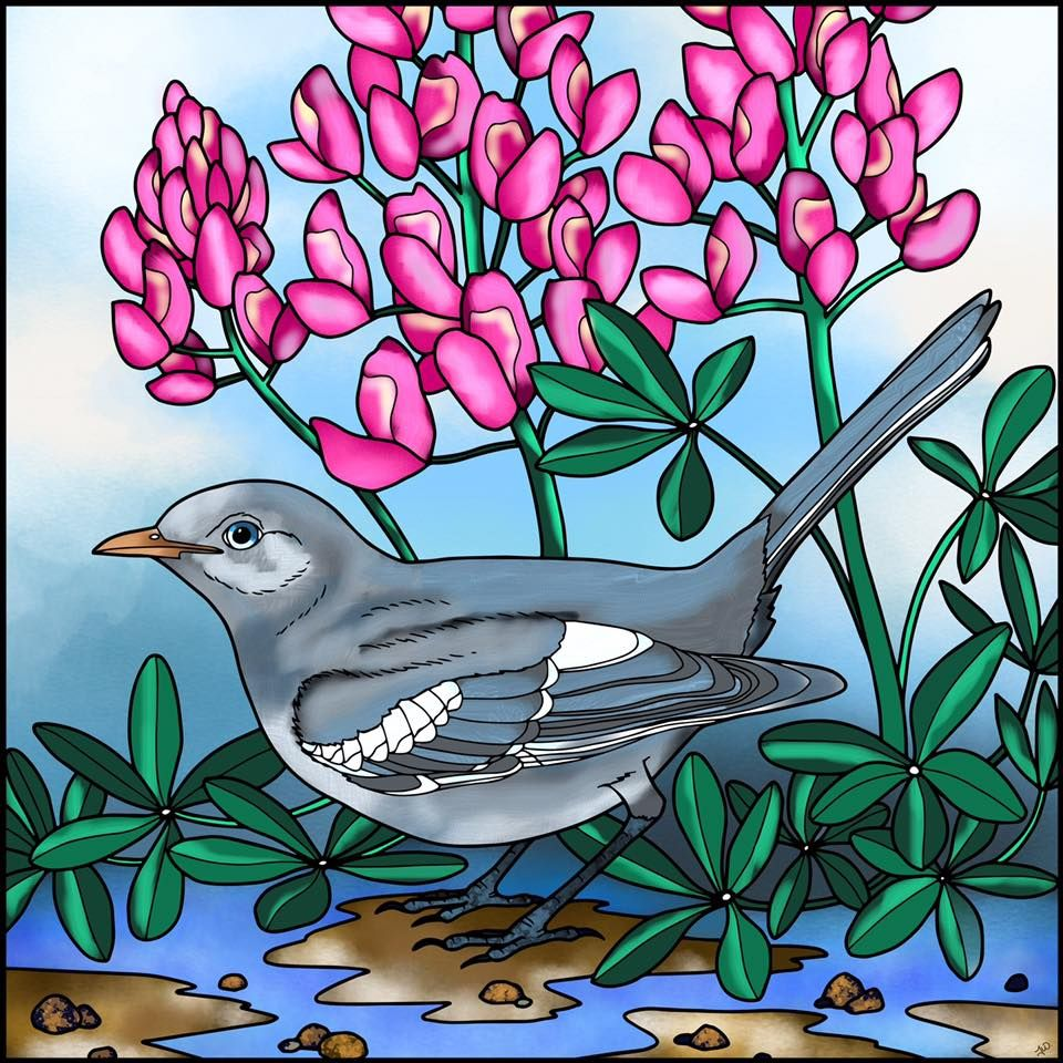 Have You Seen Terri Wards Series Of Wonderful Bird Colorings