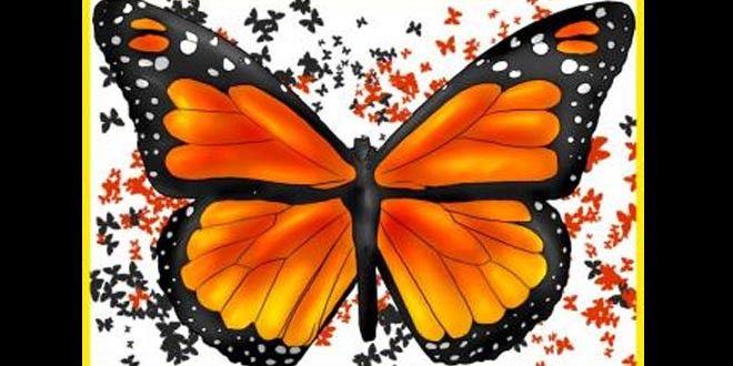 تعلم رسم فراشة تقف على الوردة تعليم الرسم تعلم الرسم Monarch Butterfly Butterfly Drawing Butterfly Drawing Images